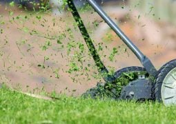 Should You Hire Someone to Cut Grass? Why or Why Not?