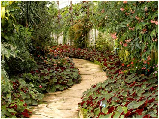 Clean-Rain-Garden