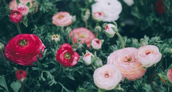 Garden-Color-Scheme