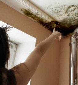 Get-Rid-of-Basement-Mold