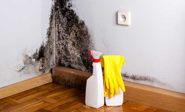How-to-Prevent-Basement-Mold