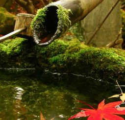 Eco-Friendly Pond