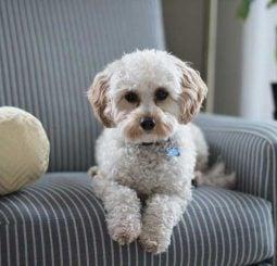 dog-proof-sofa