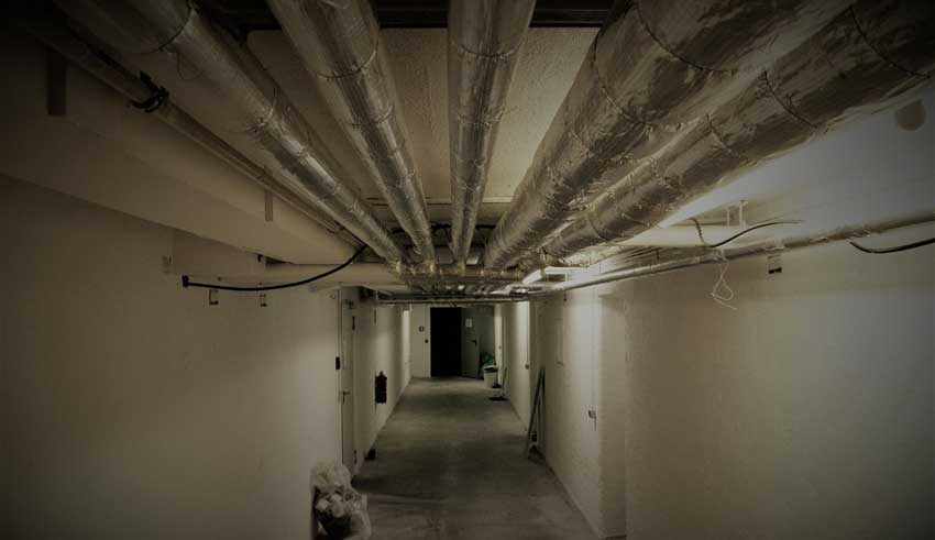 creepy-things-crawl-space